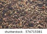 leaves | Shutterstock . vector #576715381