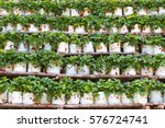a vertical organic strawberry... | Shutterstock . vector #576724741