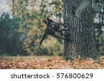 dog in autumn leaves | Shutterstock . vector #576800629