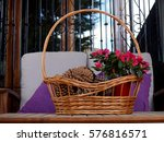 Basket With Cone Pines And...
