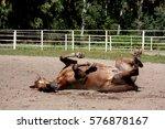 chestnut horse rolling in the... | Shutterstock . vector #576878167
