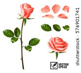 Stock vector realistic vector elements set of pink roses petals leaves bud and an open flower 576901741