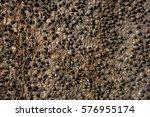 spiny tree | Shutterstock . vector #576955174