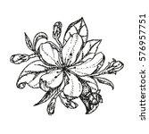 vector nature botanical... | Shutterstock .eps vector #576957751