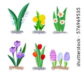 spring flowers growing in the... | Shutterstock .eps vector #576969535