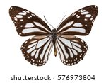 Stock photo brown butterfly isolated on white 576973804