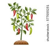 red and green hot chili pepper... | Shutterstock .eps vector #577055251