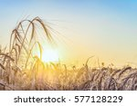 agricultural background with... | Shutterstock . vector #577128229