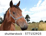 horse behind fence at a farm in ... | Shutterstock . vector #577152925