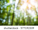 image of green blurred garden... | Shutterstock . vector #577192339