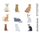 Stock vector collection cats of different breeds vector isolated cat on white background home animal or pets 577227529