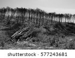 Burned forest trees in forest fire environment
