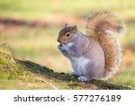 Squirrel Eats