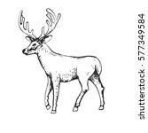deer engraving style  vintage... | Shutterstock .eps vector #577349584