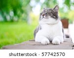 Stock photo cute cat enjoying himself outdoors 57742570