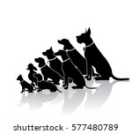 Stock vector group of sitting dogs in different breeds dog silhouette collection with copy space ranging in 577480789