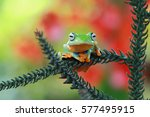 tree frog | Shutterstock . vector #577495915