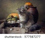 Cat And Quail Eggs