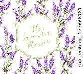 frame of lavender flowers on a... | Shutterstock .eps vector #577668181