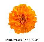 Marigold Flower On A White...