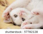 Stock photo beautiful kitten 57782128