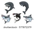 shark  killer whale  hammerhead ... | Shutterstock .eps vector #577872379