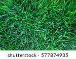 Background Of A Green Grass....
