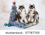 Husky Puppies On Sled With...