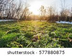 fresh green grass growing in... | Shutterstock . vector #577880875