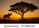 silhouette elephant on the... | Shutterstock . vector #577886269