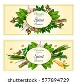 spices and herbs banners. fresh ... | Shutterstock .eps vector #577894729