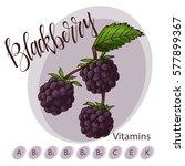 vector fruit element of... | Shutterstock .eps vector #577899367