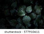 Dark Green Texture Of Wildbeta...