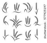 wheat or barley ears branch... | Shutterstock .eps vector #577925197