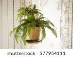 Pot Of Hanging Plant