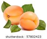 vector illustration. apricots... | Shutterstock .eps vector #57802423