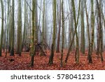 english woodland on a foggy... | Shutterstock . vector #578041231