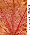 Close Up Of A Fall Leaf With...