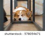 pembroke welsh corgi sleeping... | Shutterstock . vector #578054671