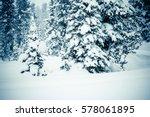 Winter Landscape. Cedars And...