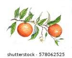 hand drawn watercolor... | Shutterstock . vector #578062525