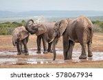 Three Adult African Elephants ...