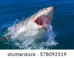 a plus four meter great white... | Shutterstock . vector #578092519