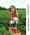 Girl Picking Strawberry In A...