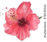 red hibiscus flower  watercolor | Shutterstock . vector #578150161