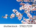 beautiful blooming almond tree... | Shutterstock . vector #578217259
