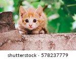 Stock photo kitten 578237779