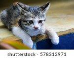 Stock photo kitten cat little cat kitten cat thailand 578312971
