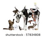 Stock photo group of pets together in front of white background 57834808