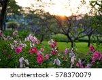 Small photo of Hollyhock flowers under the sunset, Alcea, Dusk